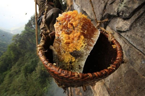 nepal_honey_hunters_17