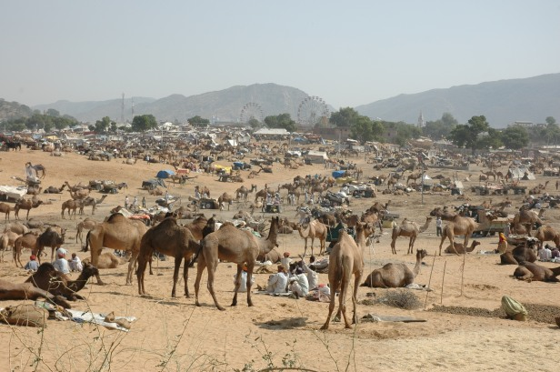 Camel_Fair_Pushkar.JPG